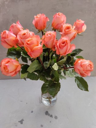Роза Коралловая