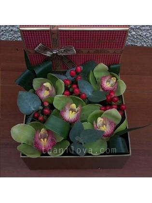 Зеленые орхидеи в коробке