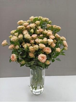 кремовая спрей роза